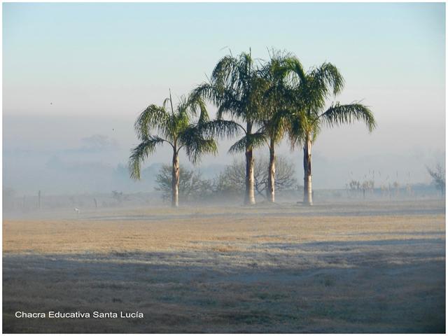 Pindó en una mañana de invierno - Chacra Educativa Santa Lucía