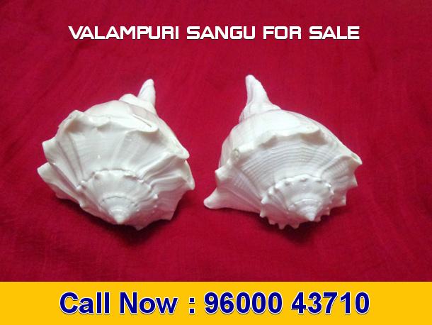 Valampuri Sangu for Sale