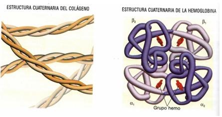 Pau I E S José Caballero Estructura De Las Proteínas