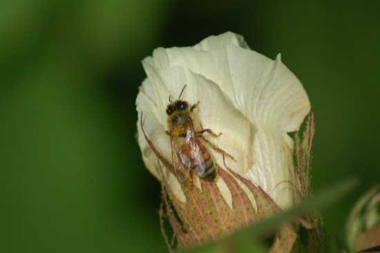 Μελισσοκομικοί χειρισμοί Αυγούστου