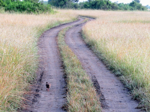 Driving track in Queen Elizabeth National Park in Uganda