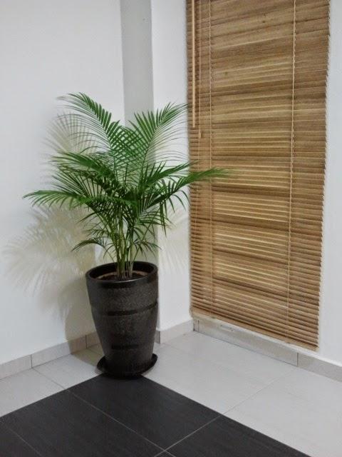 Pokok Hiasan Tambahan Dalam Rumah