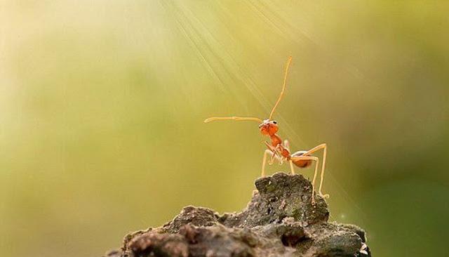 Soal Mencari Rezeki, Belajarlah Pada Semut