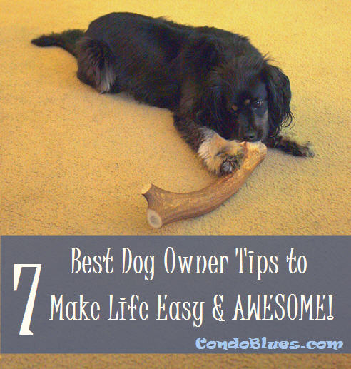 7 Best Dog Owner Tips to Make Life Easy and Awesome