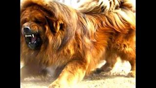أسعار الكلاب فى مصر 2016 بالصور