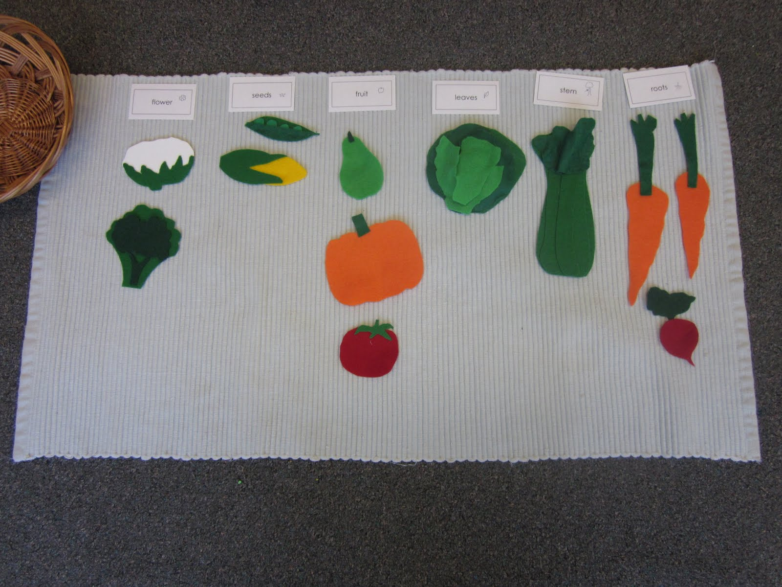 Sooke Montessori Seeds Fruit Leaves Roots Flowers Or Stem