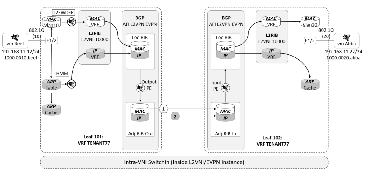 The Network Times: VXLAN Part XV: Analysis of the BGP EVPN