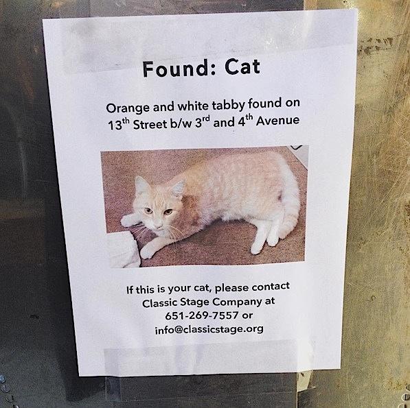 EV Grieve: Did you lose a cat?
