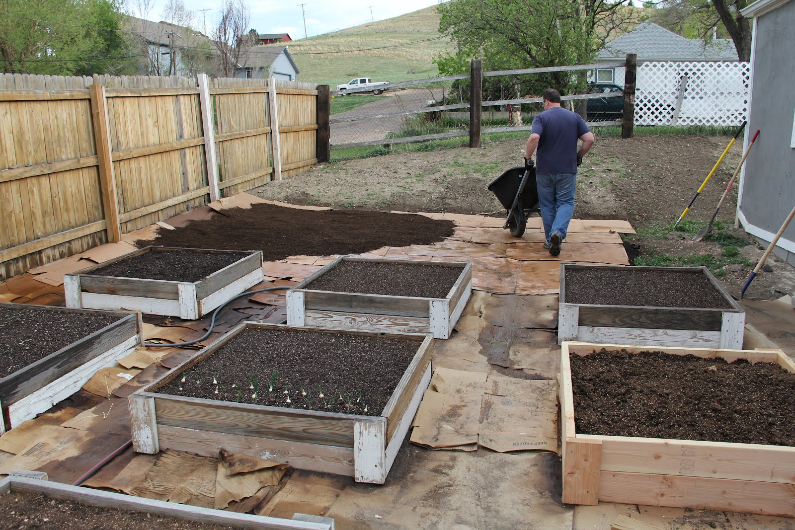 Phatveggie Square Foot Garden Meets Sheet Mulching