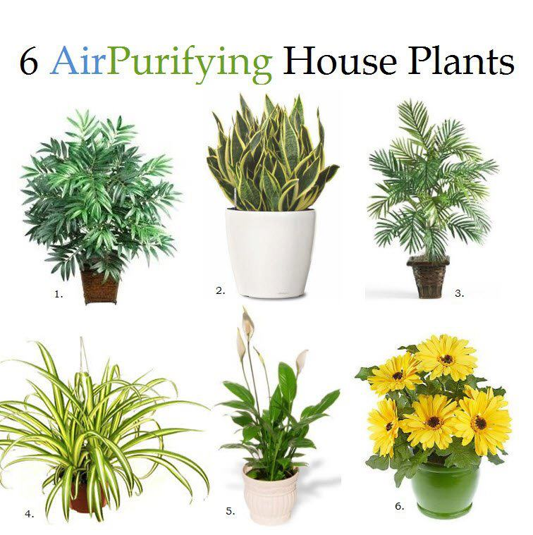 6 Air Purifying House Plants Useful One