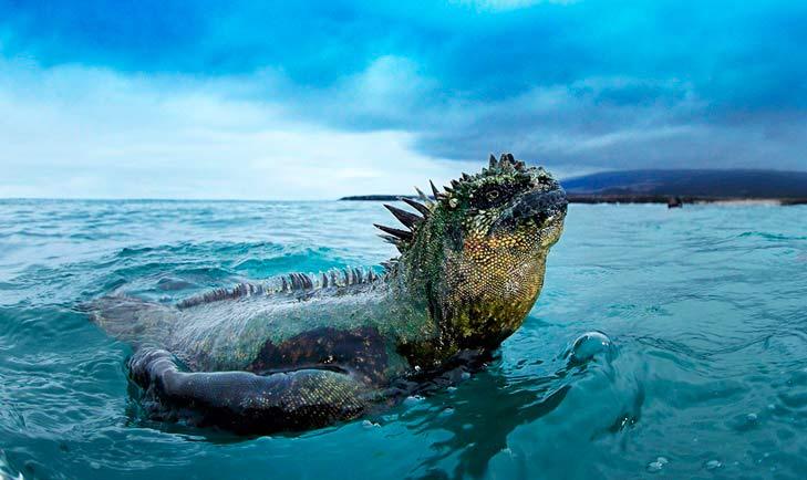 Guía de las Islas Galápagos: lo que debes saber