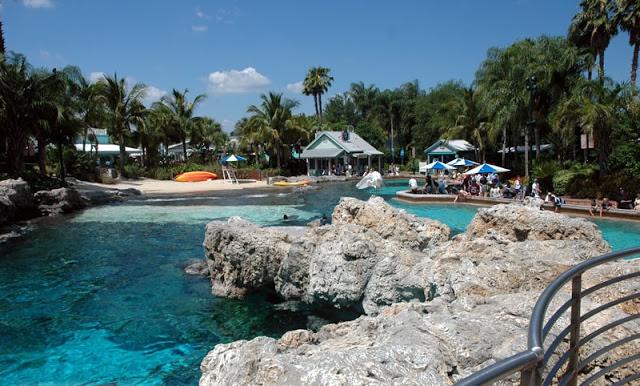 Dolphin Cove en Sea World en Orlando