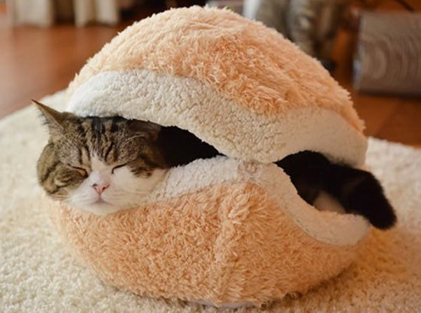 Cute Beds For Pets Combine With Interior Decoration Ideas 10