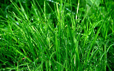 water drops on grass widescreen resolution hd wallpaper