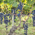 Campania, Strade del Vino: dal confronto con l'Umbria un valido esempio per capire come sfruttare al meglio i fondi del PSR