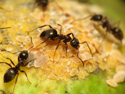 ant eating
