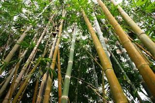 Bambusfahrrad mit Mittelmotor