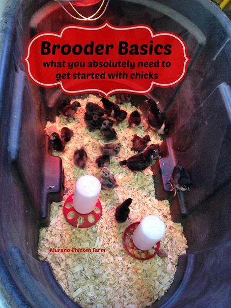 what does a chick brooder need?