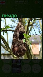 на дереве висит необычное гнездо