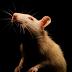 ما هي البرمجيات الخبيثة RAT ، ولماذا هو خطير جدا؟