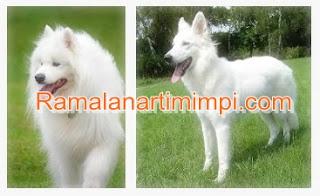 Arti Mimpi Melihat Anjing Putih