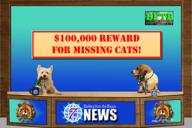 BFTB NETwoof News with cat reward announcement