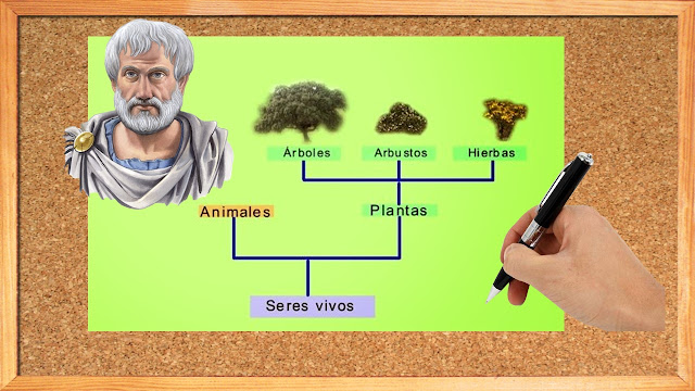 clasificación de seres vivos : Aristoteles