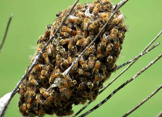 What is Really Going on with Beekeeping and Honey Processing
