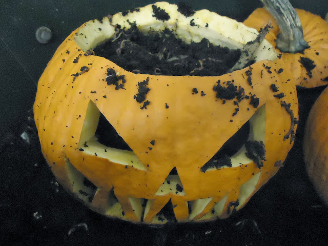 worms in pumpkin
