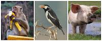 Senang sekali rasanya kali ini dapat kami bagikan materi Biologi tentang Penggolongan Jen Penggolongan Jenis / Macam-Macam Hewan (Binatang)