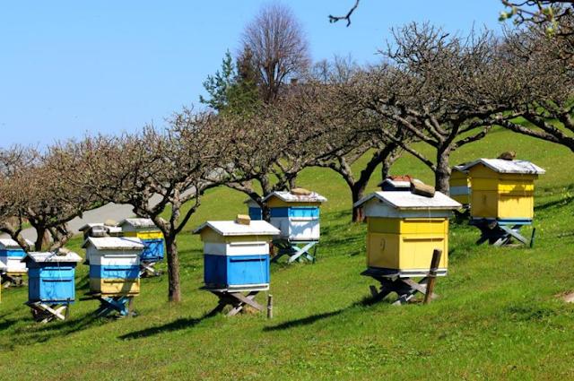 4 μυστικά για περισσότερα κέρδη απο τη μελισσοκομία ως επάγγελμα