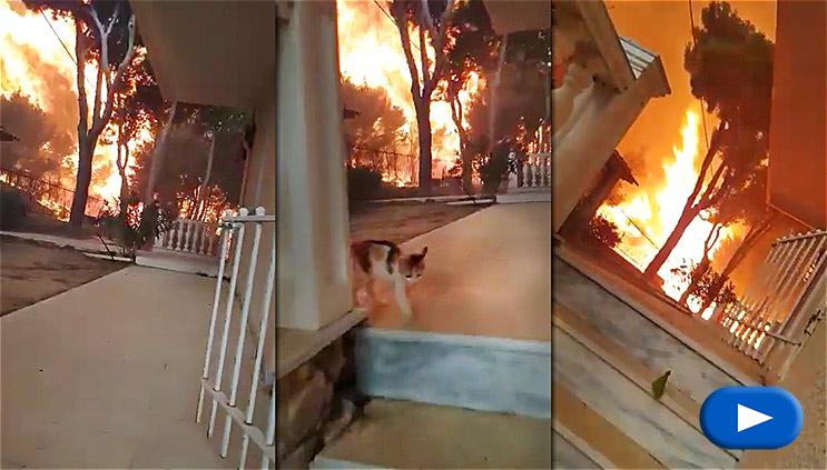 Μάτι - Εγκλωβίστηκε και η φωτιά πέρασε από πάνω του