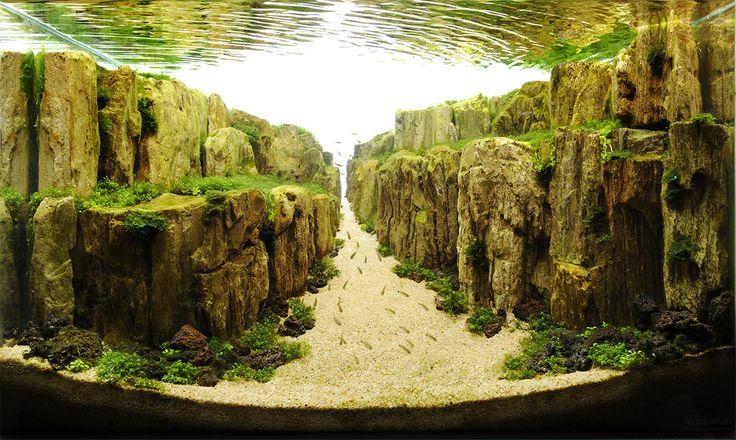một bố cục núi đá thủy sinh ấn tượng dùng đá gỗ hóa thạch