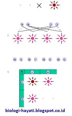 Contoh ke-3, dengan 1 faktor dominan warna: putih dan merah