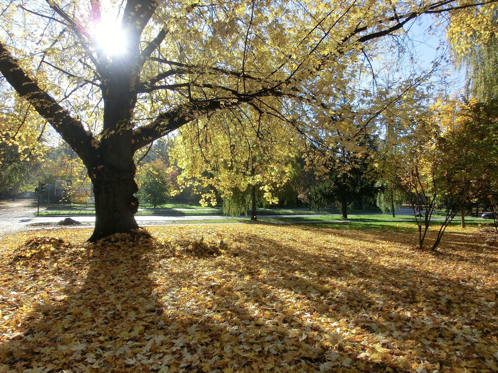 Www Wiersze Wycieczki Wspomnienia Słoneczna Jesień
