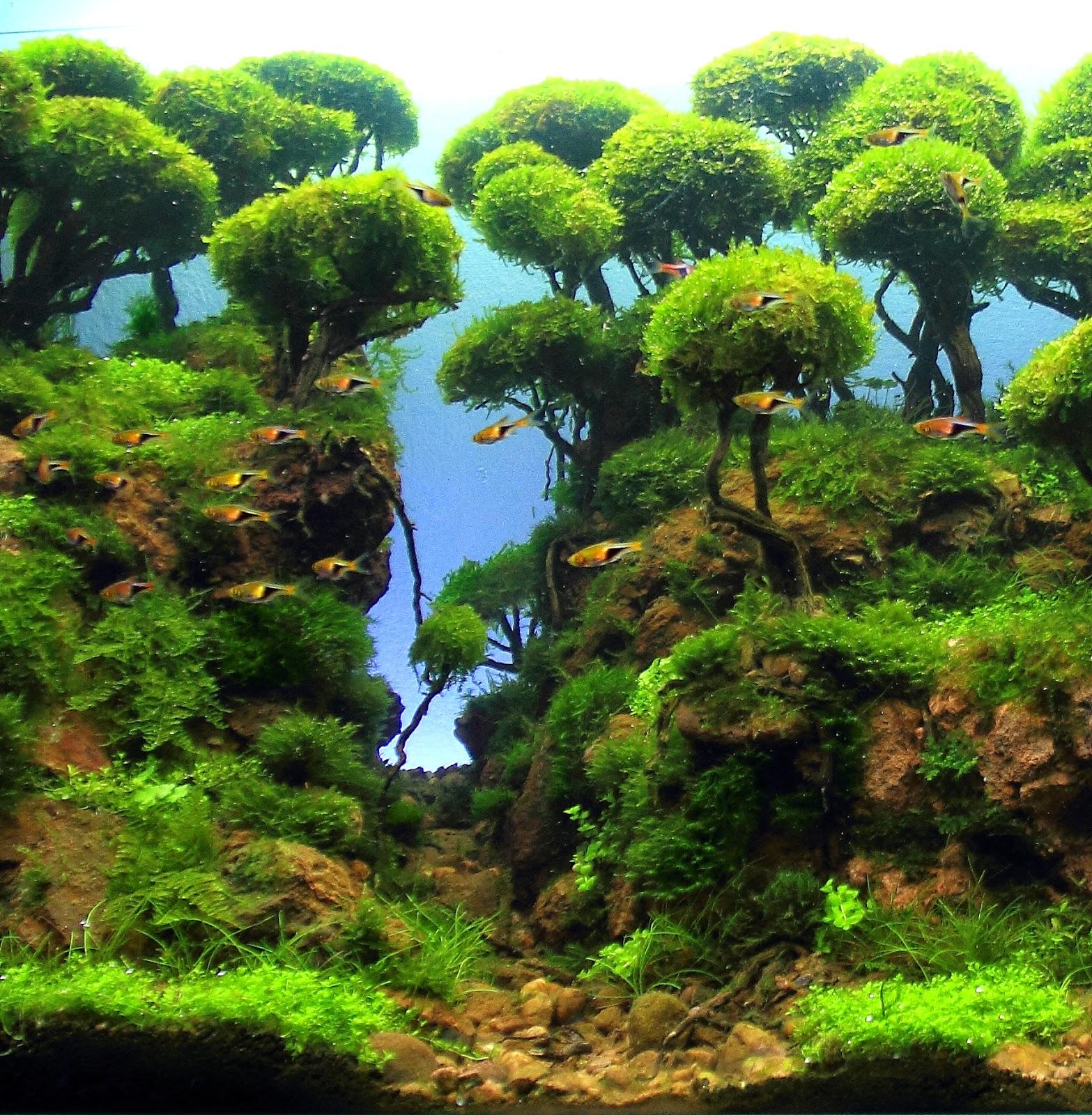 AquaScaping Spain: La Vall Seca By Bernat Hosta