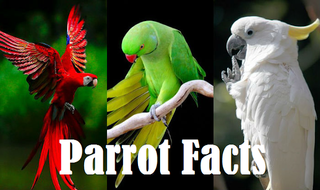 Facts About Parrot In Hindi And Parrot Bird Information In Hindi