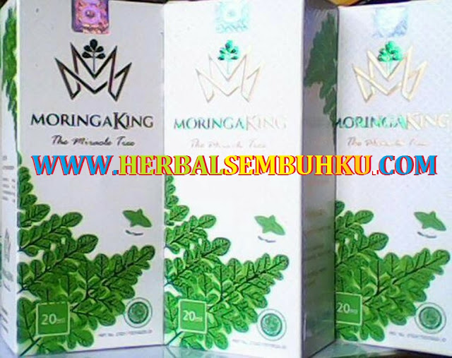 JUAL MORINGA KING DI SURABAYA SIDOARJO JAKARTA | JUAL M KING DI SURABAYA SIDOARJO JAKARTA