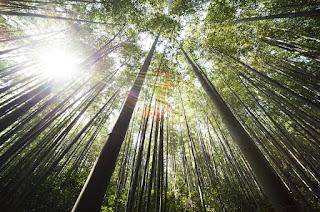 Zapewnij roślinie odpowiedni dostęp do światła słonecznego