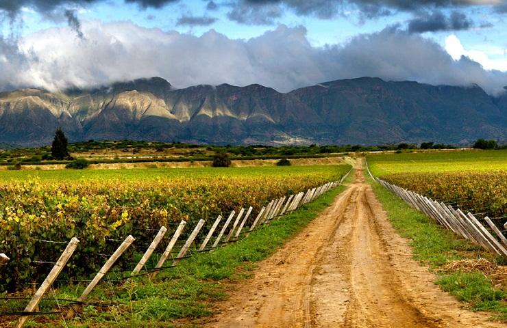 Rutas del Vino Tarija Bolivia