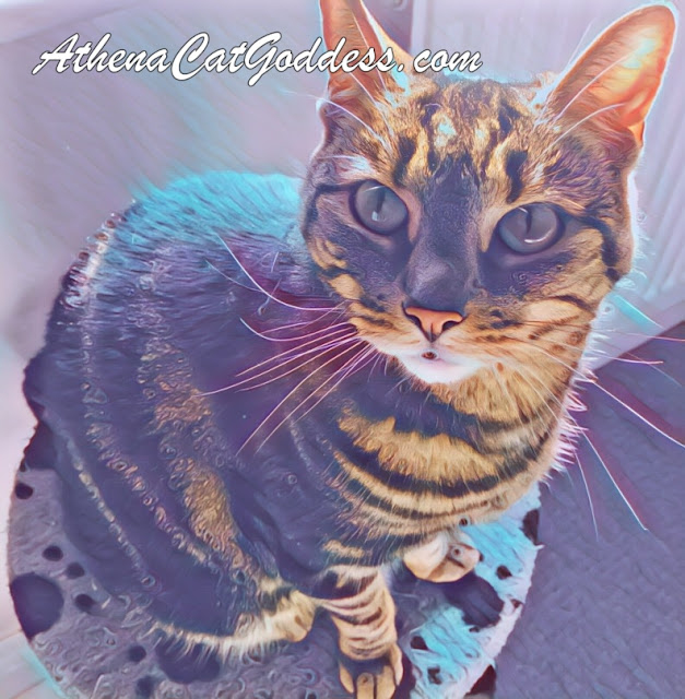 cat photo art