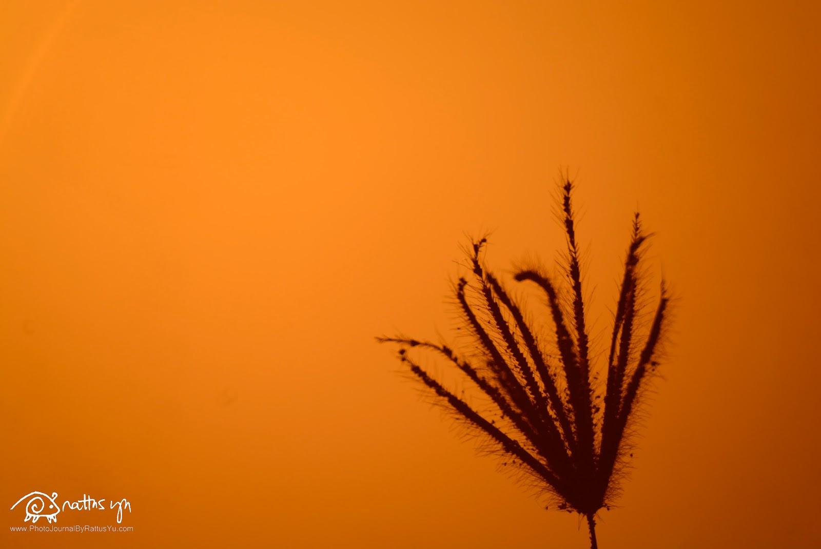 Manila Bay Sunset, Nikon D5200, Reflex-Nikkor C. 500mm f/8