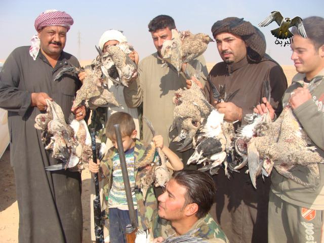مقناص قطا كدري العراق