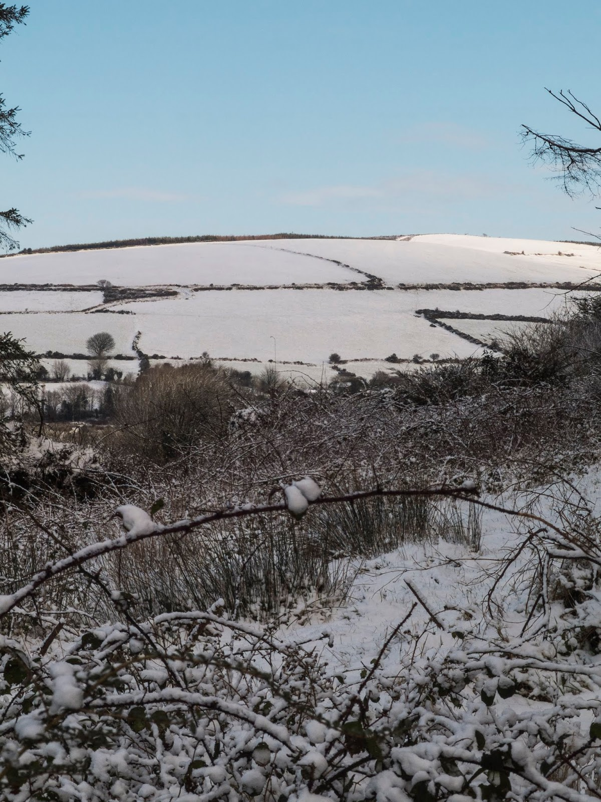 A mountain side covered in snow with brambles and grasses in the foreground.