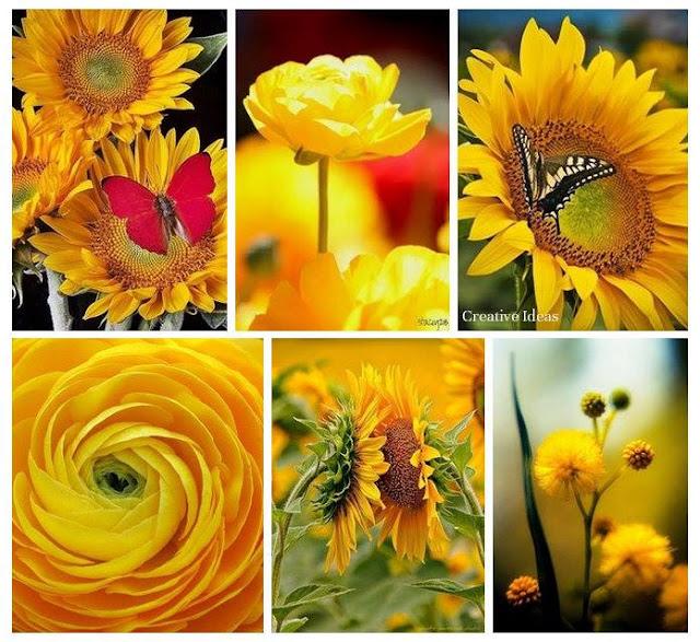 Warna-Warni Buah & Bunga
