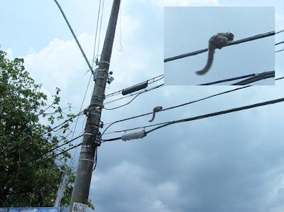 Monos en el tendido eléctrico, Salvador de Bahía, Brasil, La vuelta al mundo de Asun y Ricardo, round the world, mundoporlibre.com