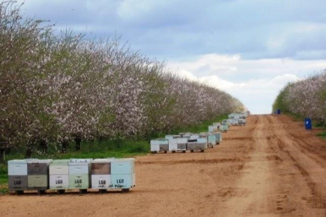 Πολλά τα κέρδη στους μελισσοκόμους του εξωτερικού: 12.000 ευρώ εισόδημα από 100 κυψέλες!