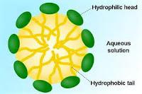 Las saponinas son compuestos activos en el Gingseng
