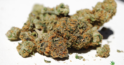 Why Weed in the San Fernando Valley? | Mr Greens Organic Delivery