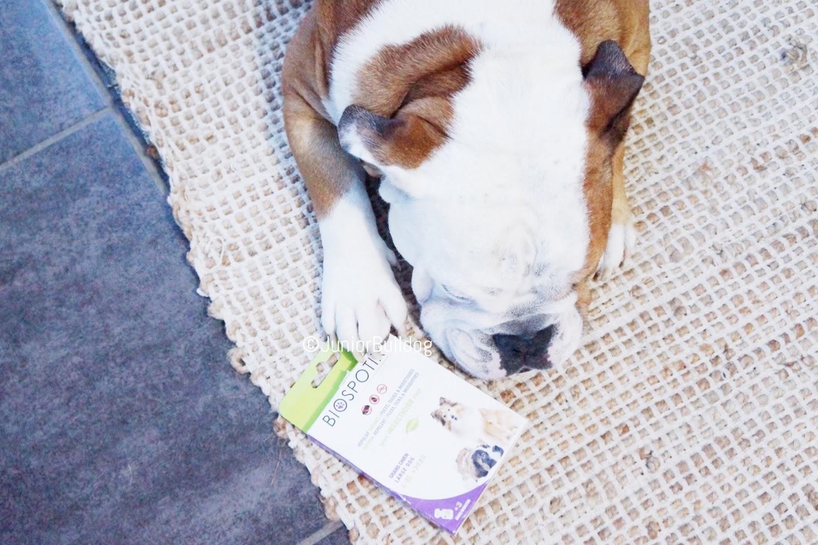 Produit naturel pour chien contre les puces tiques et moustiques biogance biospotix